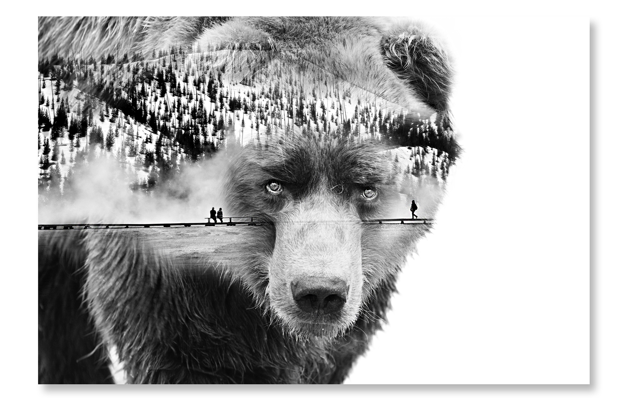 double-exposure-bear